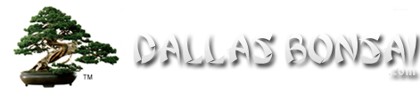 dallasbonsai-logo